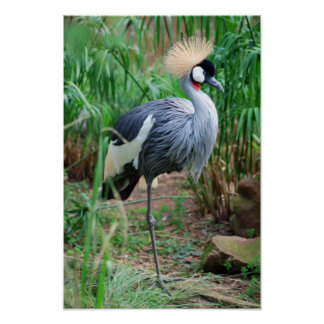 Cranes Crowning Glory Poster