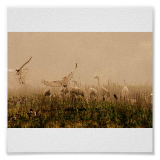 Cranes in the Mist Posters