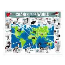 Cranes of the World Postcard