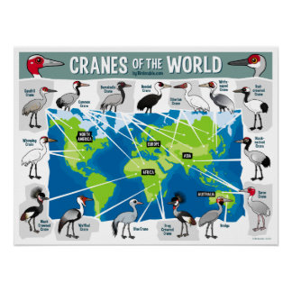 Cranes of the World Poster