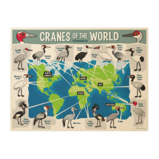 Cranes of the World Wood Print