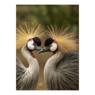 cranes pair couple custom personalize project home card