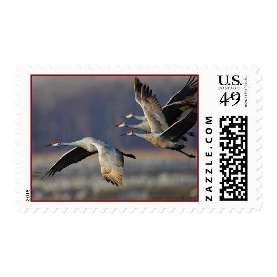 Cranes Postage