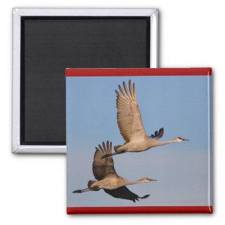Cranes Refrigerator Magnets