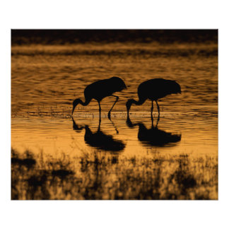 Cranes Silhouetted by the Sunset Photo Print