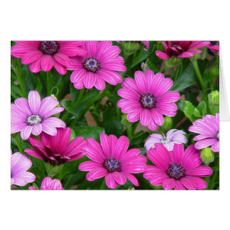 Cranesbill Geranium (Pink Flowers) Greeting Card