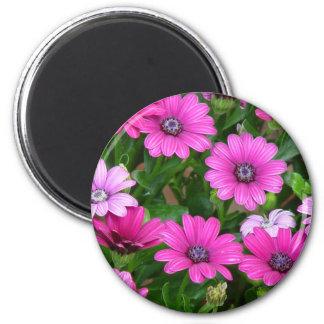 Cranesbill Geranium (Pink Flowers) Magnet