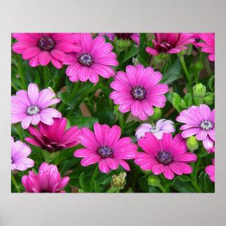 Cranesbill Geranium (Pink Flowers) Print / Poster