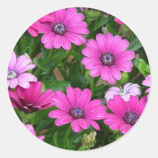 Cranesbill Geranium (Pink Flowers) Sticker
