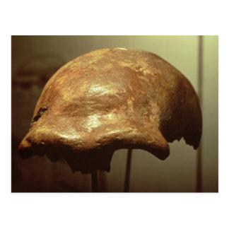 Cranium of a Neanderthal Postcard
