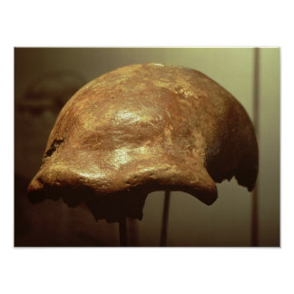 Cranium of a Neanderthal Poster