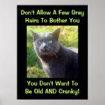 Cranky Cat Humor Poster