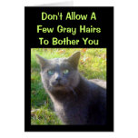 Cranky Cat Humorous Birthday Card