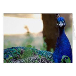 Cranky Peacock Card