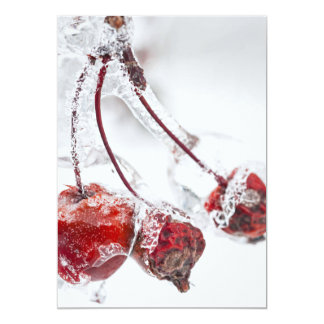 Crap apples on icy branch card