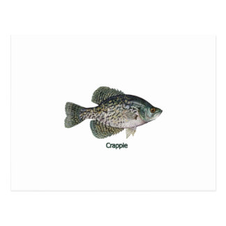 Crappie (titled) postcard