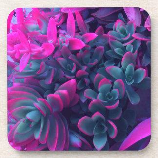 Crassula Campfire Colorful Succulent Plants Drink Coaster