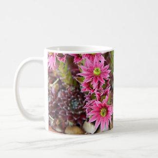 Crassula Flowers Coffee Mug