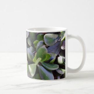 Crassula ovata coffee mug