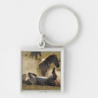 Cráter de Ngorongoro, Tanzania, cebra común, Equus Llaveros Personalizados