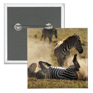 Cráter de Ngorongoro, Tanzania, cebra común, Equus Pins