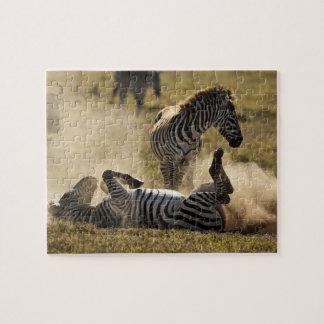 Cráter de Ngorongoro, Tanzania, cebra común, Equus Puzzles Con Fotos
