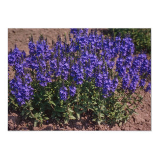 """Crater Lake Blue, (Veronica) flowers 5"""" X 7"""" Invitation Card"""