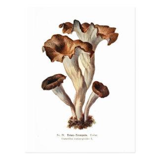 Craterellus cornucopioides postcards