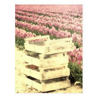 Crates in the Tulip fields Postcard