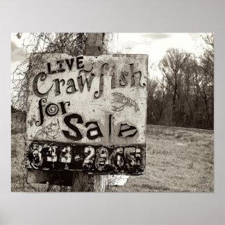 Crawfish [Art Print]