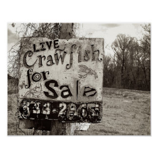Crawfish [Art Print] Poster