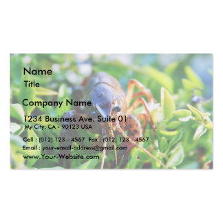Crawfish Crawdads Crayfish Double-Sided Standard Business Cards (Pack Of 100)