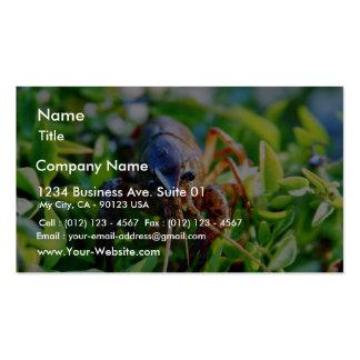 Crawfish Crawdads Crayfish Business Card