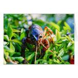 Crawfish Crawdads Crayfish Greeting Card