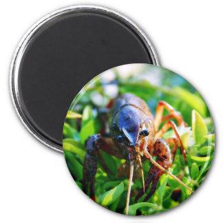 Crawfish Crawdads Crayfish Magnet
