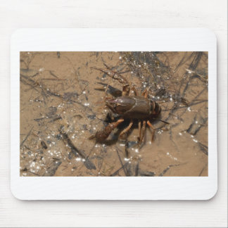 Crawfish in Pond in Alabama Mouse Pad