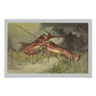 Crawfish or Spiny Lobster Vintage Print Photo Print