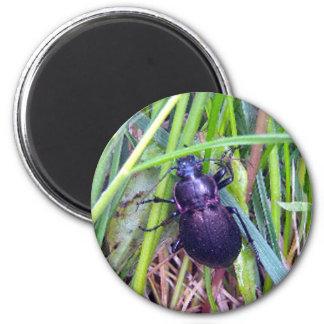 Crawling Beetle Magnet