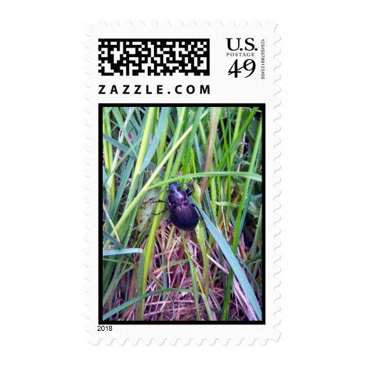 Crawling Beetle Stamp