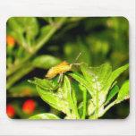 Crawling Chili Bug Mouse Mat