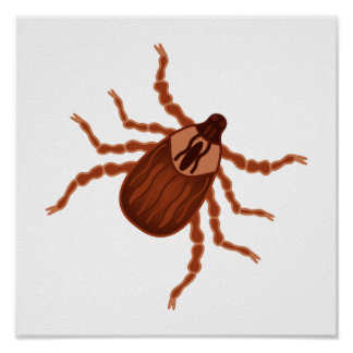 Crawly Realistic Tick Illustration Posters