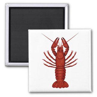 Crayfish Magnet