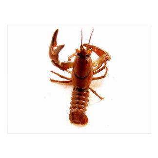 Crayfish Postcard