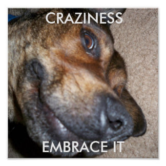 Craziness Embrace It Poster