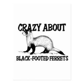 Crazy About Black-Footed Ferrets Post Card