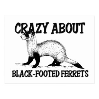 Crazy About Black-Footed Ferrets Postcard