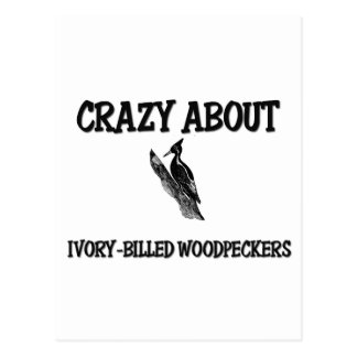 Crazy About Ivory-Billed Woodpeckers Postcard