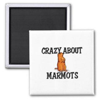 Crazy About Marmots Magnet