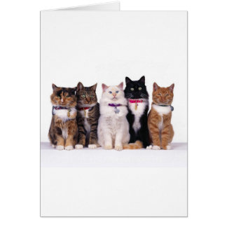 crazy cat lady cats greeting card