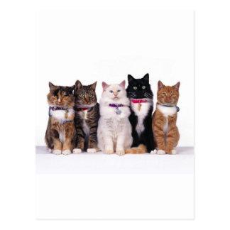 crazy cat lady cats postcards
